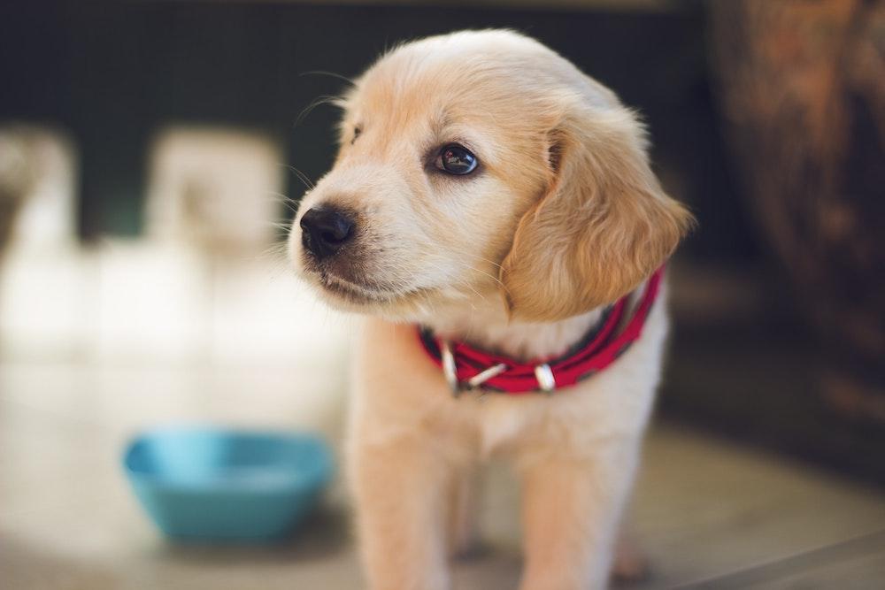 pet health insurance Freehold NJ